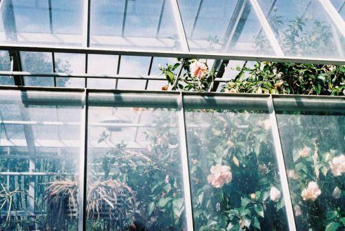 greenhouse sarita lolita