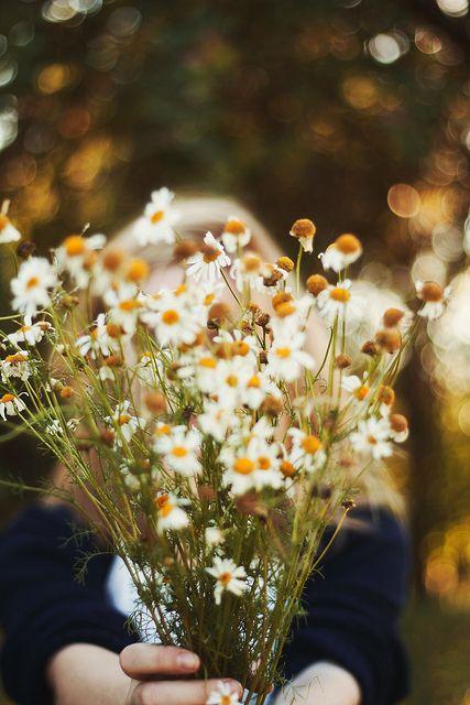 daisy picking