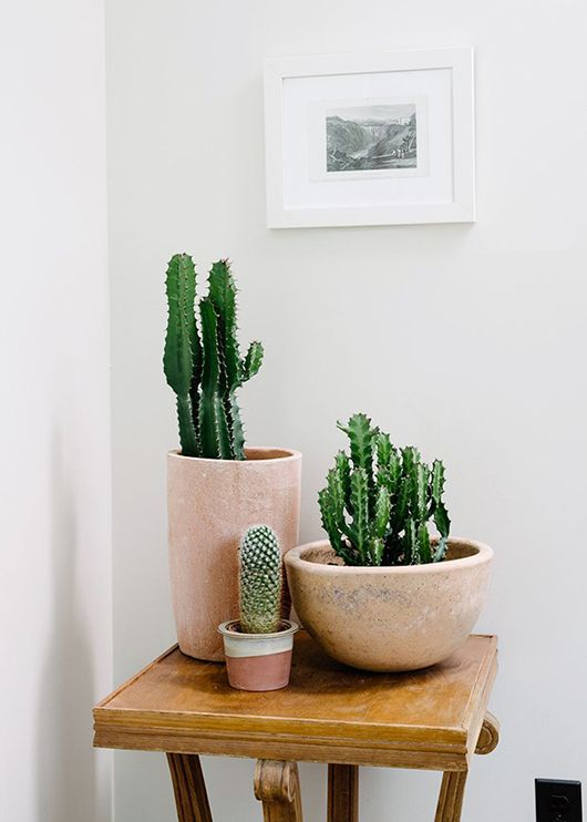 nude cactus pots