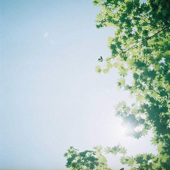 himarin japan photography