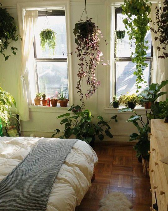 bedroom plant garden