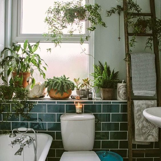 bathroom plants interior