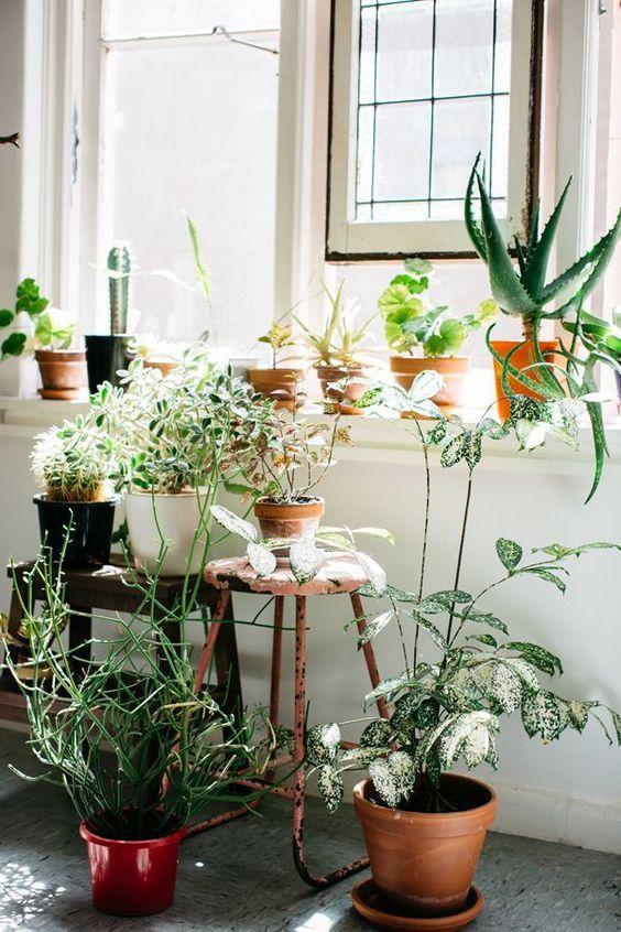 interior garden plants
